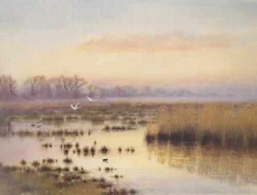 Dusk – Sutton Fen